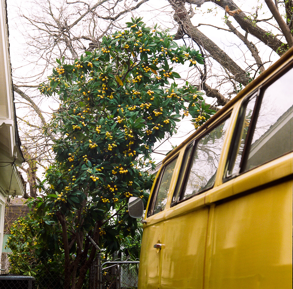 Kumquat tree and VW bus, Montrose, Houston, Texas