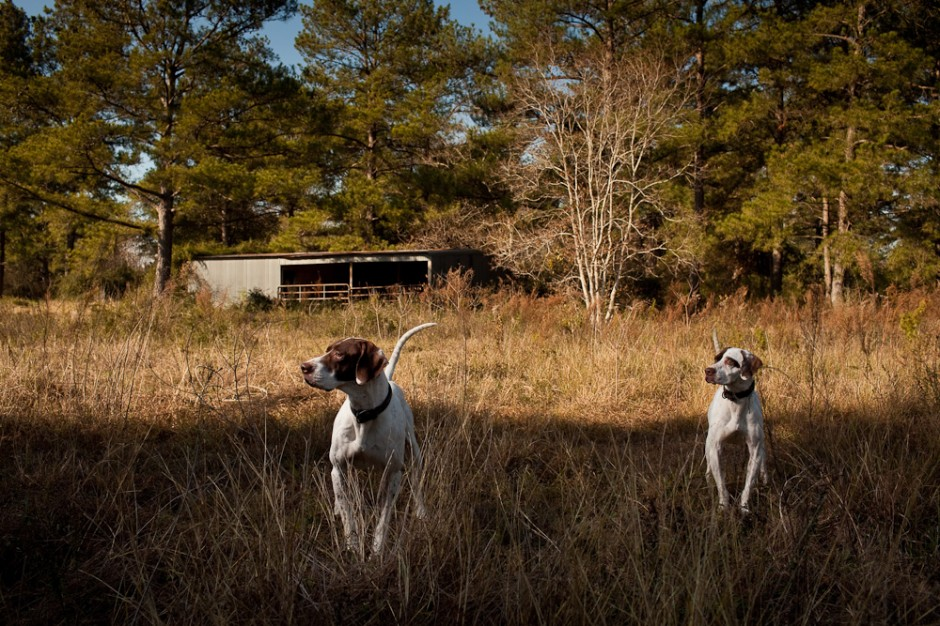 Pointers, Cypress, Texas