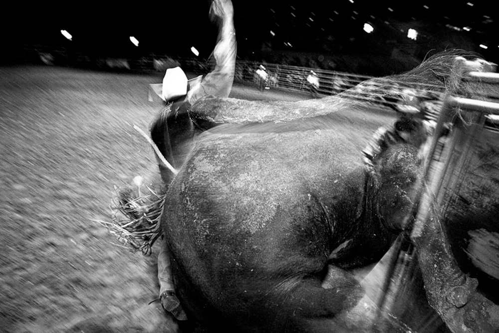 David Gonzales breaks out of the chute at Cowboys Dancehall in San Antonio, Texas. He was bucked off hard seconds later. July 27, 2007. © Lance Rosenfield