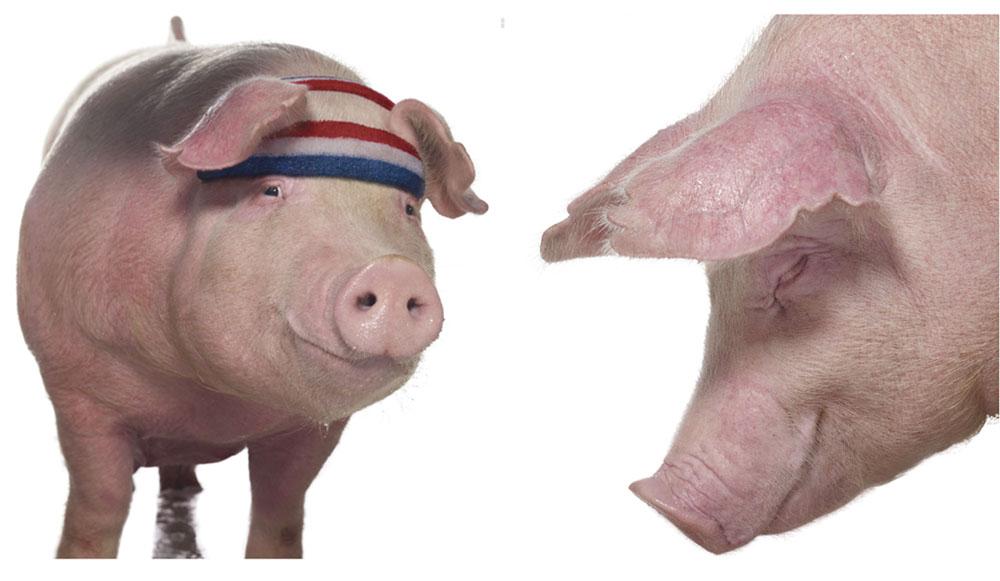 3_pig