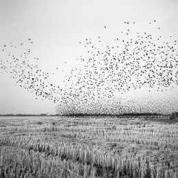 thibodeaux_brandon_birds_in_field_12x12